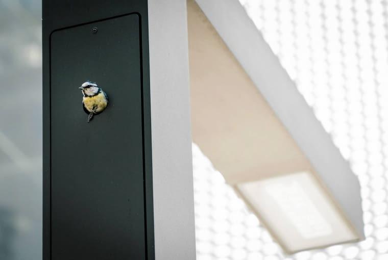 18.05.2017 Poznan . Latarnie z dziuplami przy ul. za Bramka pomiedzy biurowcem a MOPSem . ' lampy w ciazy ' . W jednej z latarni gniazdo buduje sikorka modra . Fot. Lukasz Cynalewski / Agencja Gazeta
