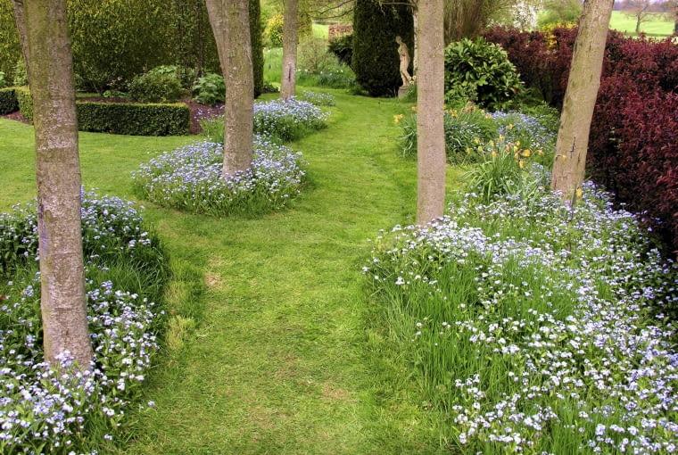 Ciekawy pomysł - na trawniku zaaranżowano błękitno-zielone wysepki z niekoszonej trawy i niezapominajek.