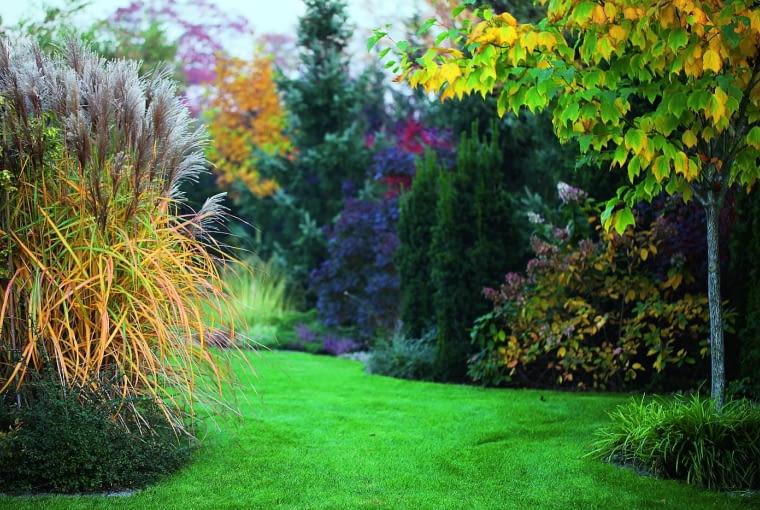 Trawy ozdobne i przebarwiające się drzewa jesienią tworzą malownicze obramowanie trawnika.