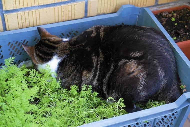 W jedenj ze skrzynek umościł sobie legowisko kot Igi