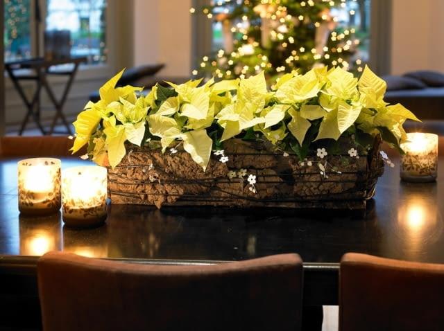 Boże Narodzenie. Oprawa wigilijnego stołu. Gwiazda betlejemska