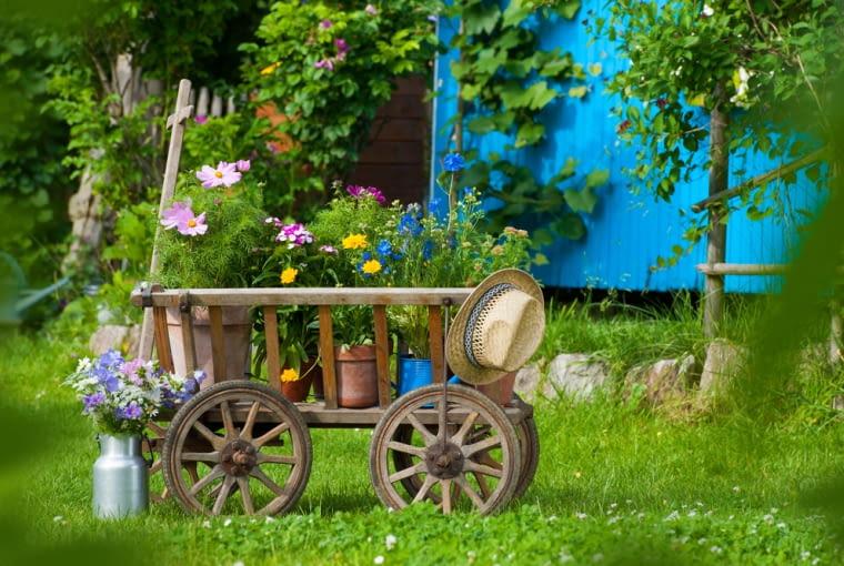 Wygląda pięknie, a tak niewiele pracy trzeba włożyć w tę ozdobę ogrodu. Wystarczy 'porzucić' wóz (na zdjęciu wózek) i postawić przy nim starą konewkę. Możemy pozwolić wspiąć się na niego pachnącemu groszkowi i gotowe. Właściciele małych ogródków zdecydują się raczej na wiklinową wersję tej ozdoby.