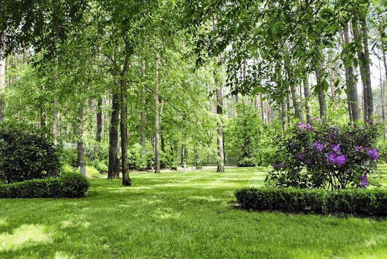 STARE DRZEWA dominują w tym ogrodzie. Wysokie krzewy, posadzone wzdłuż płotu, osłaniają wnętrze przy granicy z sąsiednią działką.