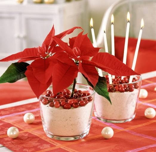 Ozdoby i dekoracje na Boże Narodzenie. Stroiki bożonarodzeniowe. Ta efektowna dekoracja to włożone do probówek z wodą krótkie gałązki odmiany 'Prestige', które umieszczono w szklanych wazonach wypełnionych białym żwirem i owocami żurawiny.