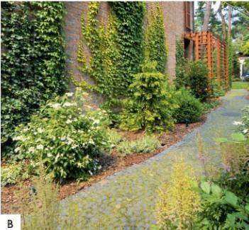 B Linki rozpięte na ścianach ułatwiają roślinom wspinaczkę