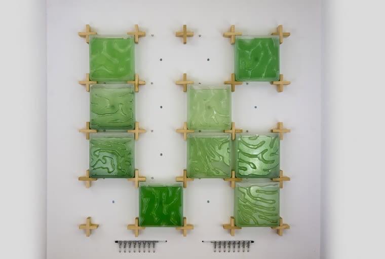 The Coral - domowa hodowla alg. Proj. Hyunseoka An