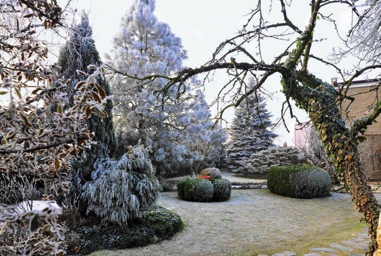 MASYWNE STRZYŻONE bukszpany i cisy kontrastują z delikatnymi konstrukcjami roślin liściastych.