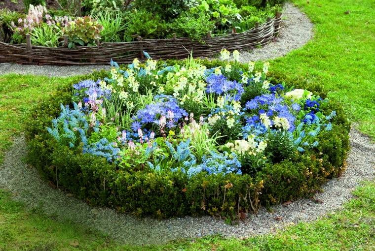 Klomb obsadzono kwiatami cebulowymi: niebieskimi zawilcami powabnymi, szafirkami oraz biało kwitnącym lakiem itiarellą oróżowawych kwiatostanach. Otacza go niska obwódka zbukszpanu.