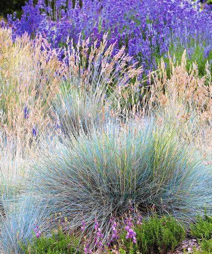 hr-dz pr-dz SLOWA KLUCZOWE: golanice przydrozna garden summer vertical