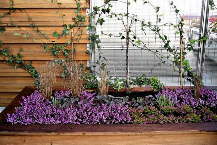 KOMPOZYCJA urządzona w skrzyni, a w niej wrzosy, dąbrówka i niskie trawy ozdobne.