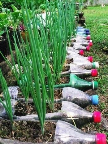 Gdy ziemia w Twoim ogrodzie nie jest zbyt żyzna, możesz stworzyć plantację w doniczkach. Tym razem z butelek PET Więcej na: www.pottedvegetablegarden