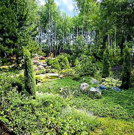 Działka w malowniczym otoczeniu lasu liściastego to idealne miejsce dla jałowców i świerków. Uzupełniają je kępy biało obrzeżonej funkii 'Albomarginata'.