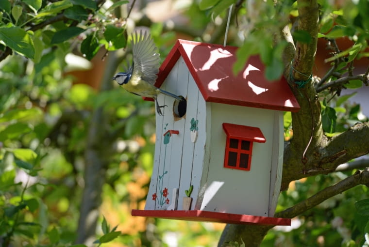 Każdy ptak ma swoje wymagania dotyczące kształtu budki lęgowej, ale nie koloru. Możemy jeszcze zrobić własne budki i fantazyjnie je udekorować, a ptaki z pewnością zdążą się z nimi oswoić. Nawet jeśli jest już dość późno, nie rezygnujmy , bowiem niektórzy skrzydlaci sąsiedzi (jak choćby wspomniana sikorka) powtarzają lęg. Ważne jest, byśmy powiesili je od strony wschodniej, lub północnej (młode pisklęta będą cierpieć w pełnym słońcu) oraz byśmy przewidzieli system czyszczenia budek lęgowych (pozostałości po poprzednich lokatorach mogą bardzo zaszkodzić młodym ptakom).