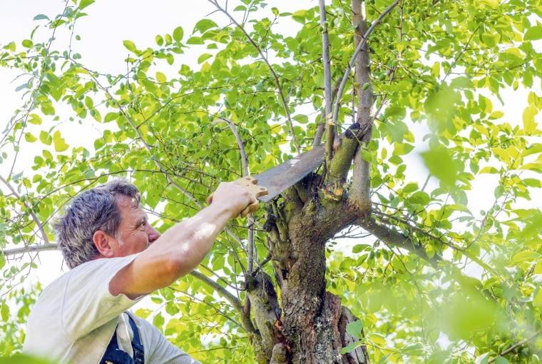 Wprawdzie obecna ustawa o wycince drzew obowiązuje dopiero od stycznia tego roku, jednak już wzbudza ogromne kontrowersje...