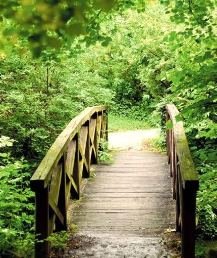 Tradycyjny mostek w naturalnym kolorze spłowiałego drewna nie konkuruje z roślinnością leśnego ogrodu