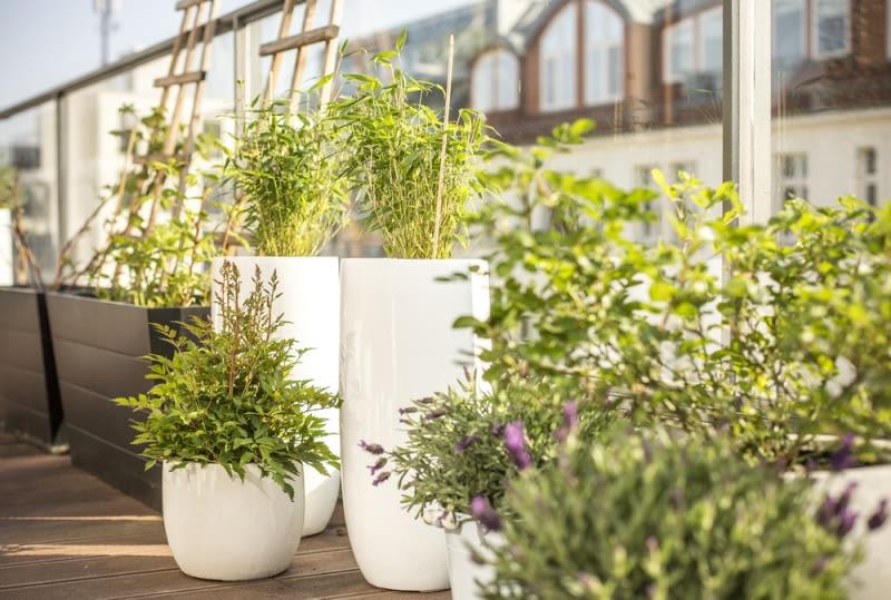 Jak urządzić ogród w mieście- balkon pełen kwiatów