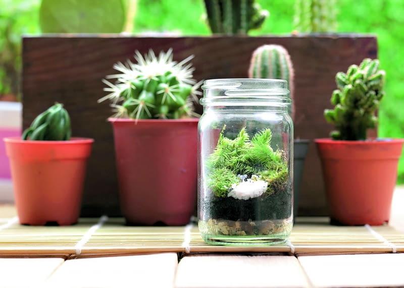Miniaturkę lasu można stworzyć nawet wzwykłym słoiku po dżemie.
