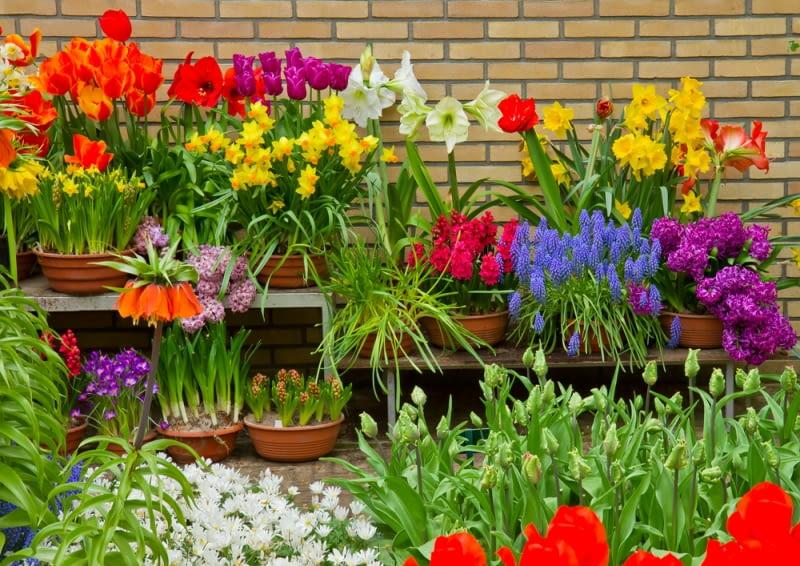 Wiosenna kompozycja kwiatów w doniczce