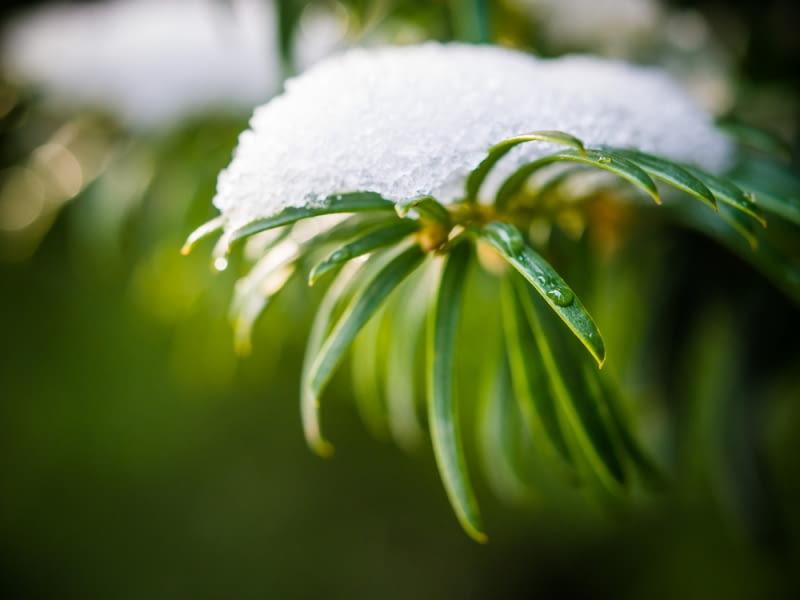 Mocne opady śniegu
