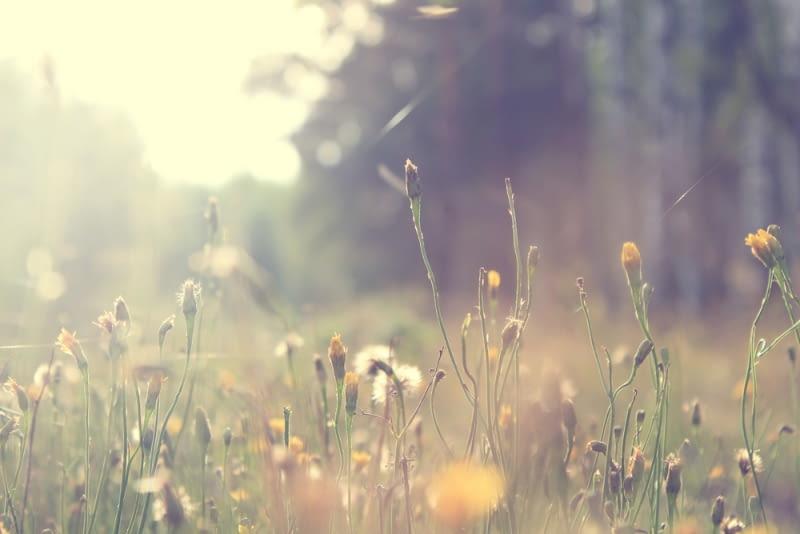 Kwiatowa łąka pojawi się sama, jeśli damy ziołom czas na rozsianie się. Rozejrzyjmy się po okolicy, jak wyglądają okoliczne dzikie łąki? Tak będzie wyglądać już za rok nasza. Niecierpliwi mogą jej wszakże pomóc i kupić odpowiednią mieszankę roślin łąkowych.