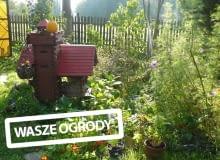 Ogród piękny o każdej porze.