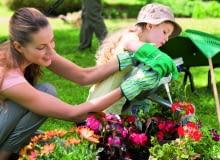 Rośliny balkonowe wymagają zasilania co 7-10 dni. Niedożywione słabo kwitną.