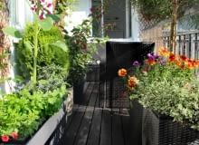 Rośliny balkonowe, czyli twój mały ogród