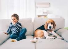 Jeśli sofa ma służyć takim aktywnym domownikom, warto wybrać jak najodporniejszą tkaninę.