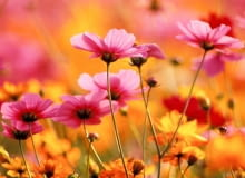 Najpiękniejsze kwiaty z ogrodów naszych babć