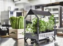 Chcesz mieć zawsze świeże zioła do gotowania? Załóż miniuprawę w swojej kuchni.