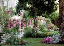 Różowe kwiaty wprowadzają nutkę romantyzmu do ogrodu