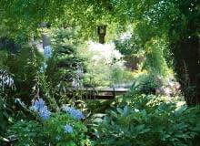 Ogród musi mieć nastrój - tutaj budują go kontrasty światła i cienia, oraz dobrane do tych warunków zestawy roślin.