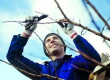 przycinanie drzew