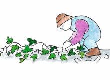 CIĘCIE PNĄCZY to podstawowy zabieg sprzyjający urodzie tych roślin.