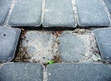 mrówki na podjeździe