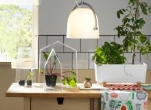 Zioła i rośliny w kuchni. Pomysły na hodowlę zielonych dodatków