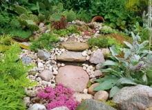 Na skalniaku mienią się kolorami rojniki iopuncja ogrodowa.