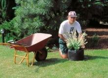 sadzenie krzewiastej wierzby w pojemniku