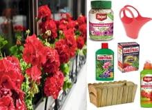 Najbardziej popularne rośliny na balkon, pelargonie
