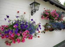 Kwiaty balkonowe. Różowe i fioletowe surfinie, czerwona zwisająca werbena i niebieska lobelia