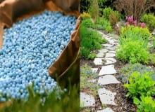 nawozy, ogrody, rośliny, trawa