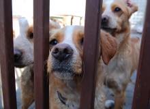 Psy ze schroniska przy ul. Marmurowej