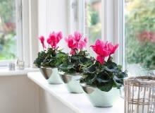 Listopad to dobry czas na zakup kwitnących roślin