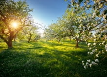 Wiosenny przegląd drzew owocowych