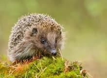 Wczesną wiosną wiele zwierząt wraca do normalnego funkcjonowania po zimowym śnie, zwanym hibernacją.