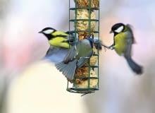 Dokarmiajmy ptaki, dopóki zaglądają do karmnika. Gdy będą już mogły same znaleźć pożywienie, przestaną go odwiedzać.