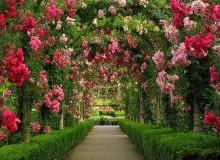 ogrody, róże