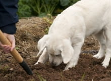 pies, rośliny