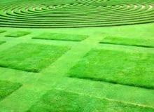 To już nie trawnik, ale prawdziwy ogrodowy dywan o ciekawej fakturze. Wzory uzyskujemy dzięki zmiennej wysokości koszenia.