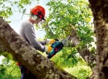 przycinanie drzew,ogród,drzewa,w ogrodzie,cięcie drzew